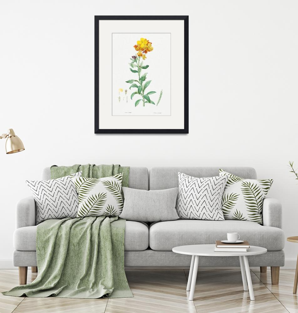 """Wallflower, Cheiranthus Cheiri Vintage Botanical""  by FineArtClassics"