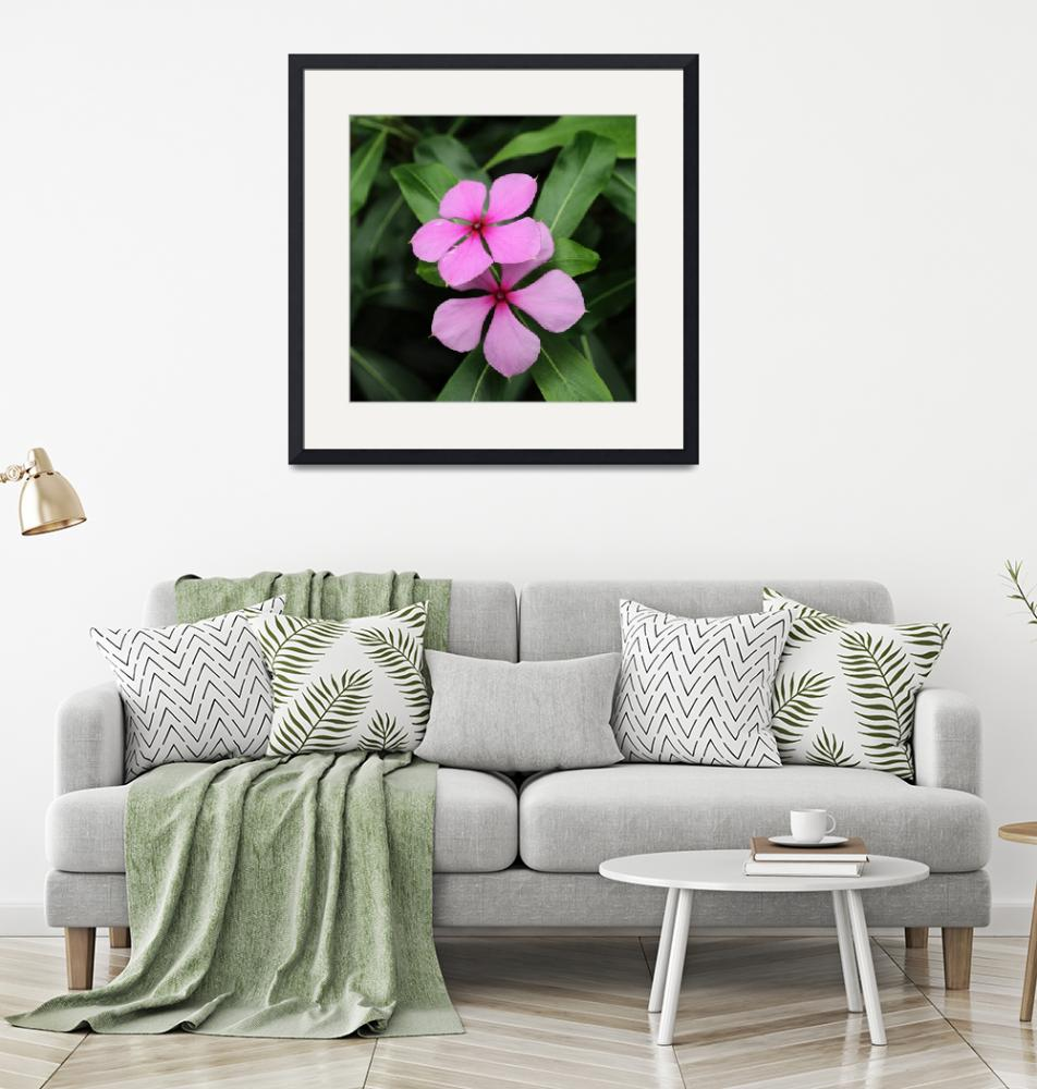 """""""Twin Madagascar Periwinkle Flowers""""  (2014) by AdrianWale"""