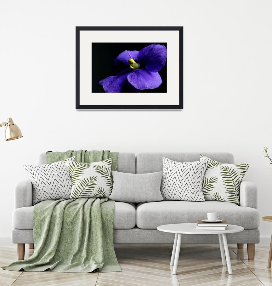 """African Violet""  by Photo-Writer"