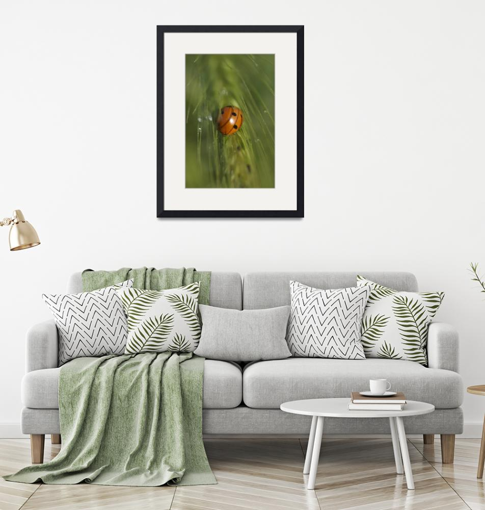 """""""Ladybug in foxtail"""" (2008) by DaeGornDesigns"""