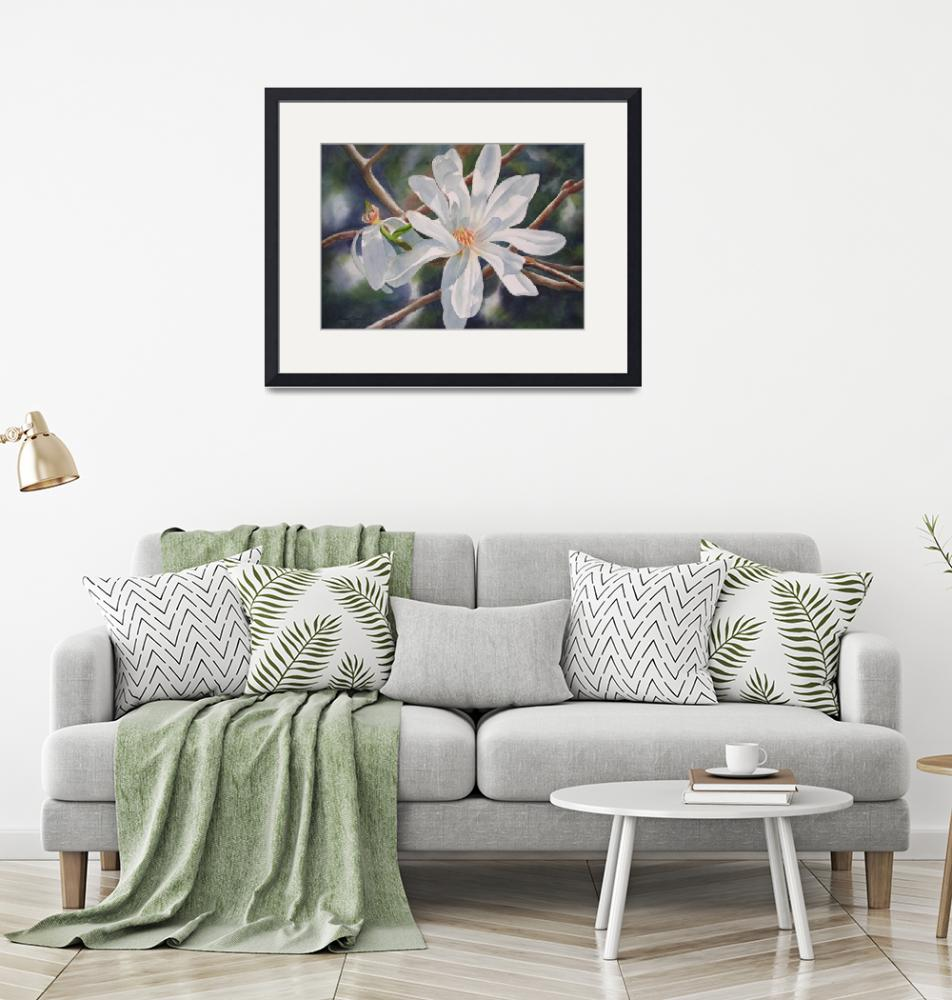 """""""Star Magnolia and Bud""""  (2009) by Pacific-NW-Watercolors"""
