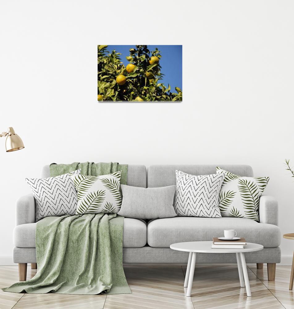 """Green lemons, Majorca""  (2019) by DavidFowler"