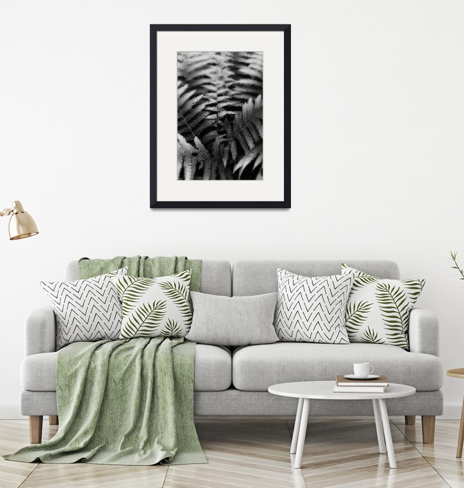 """""""Ferns in Black and White by Jim Crotty""""  by jimcrotty"""