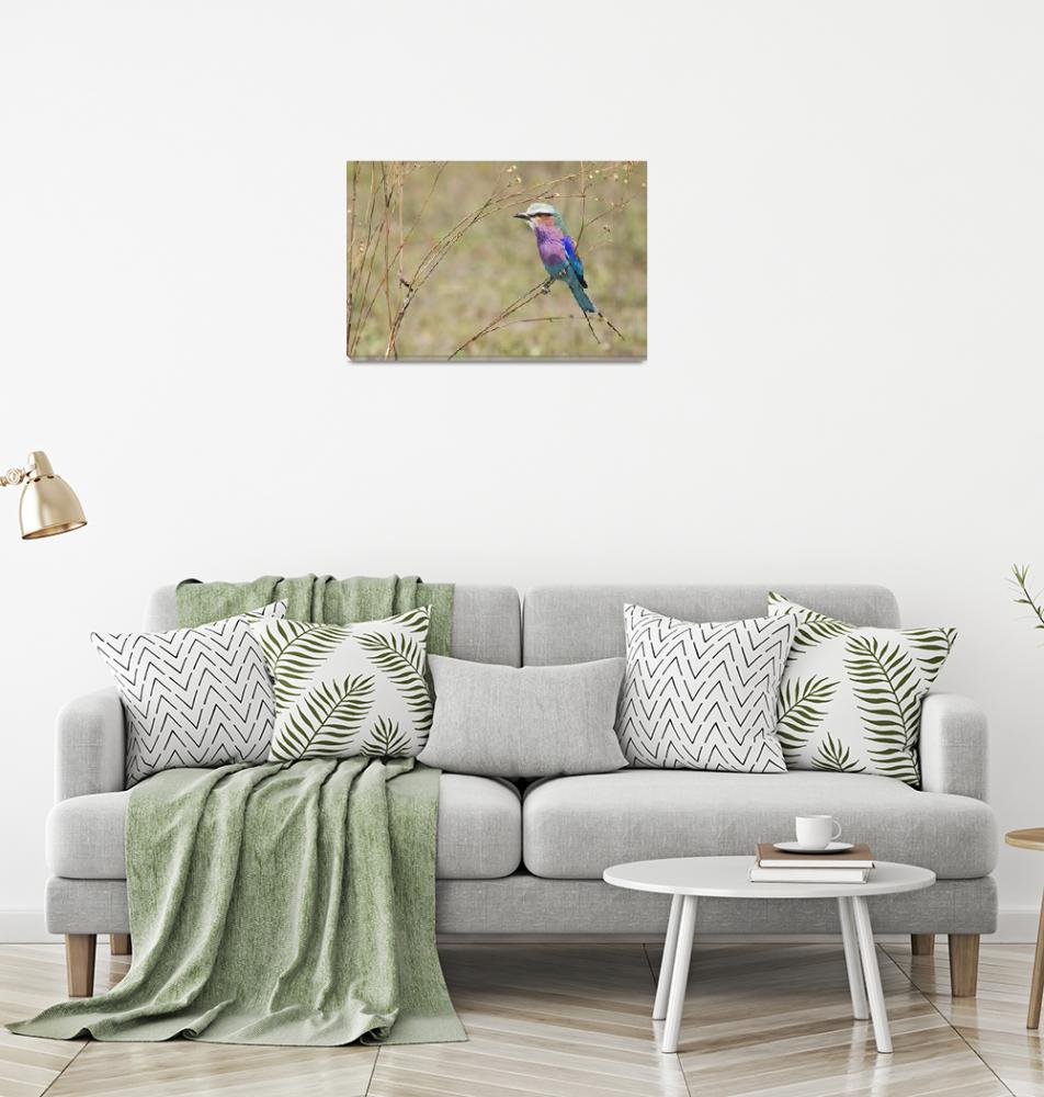 """lilac breasted roller4 8x12""  by monaco"