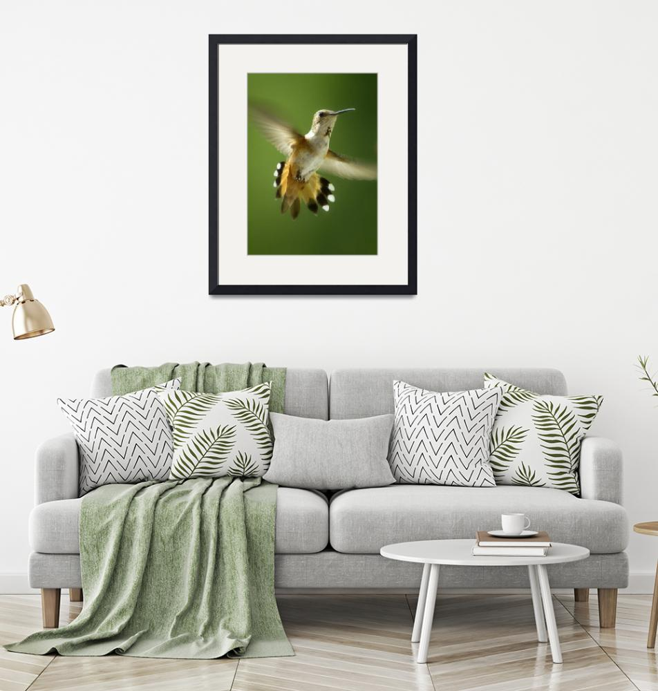 """""""Flaired Humming Bird""""  (2010) by shutterjunkie"""