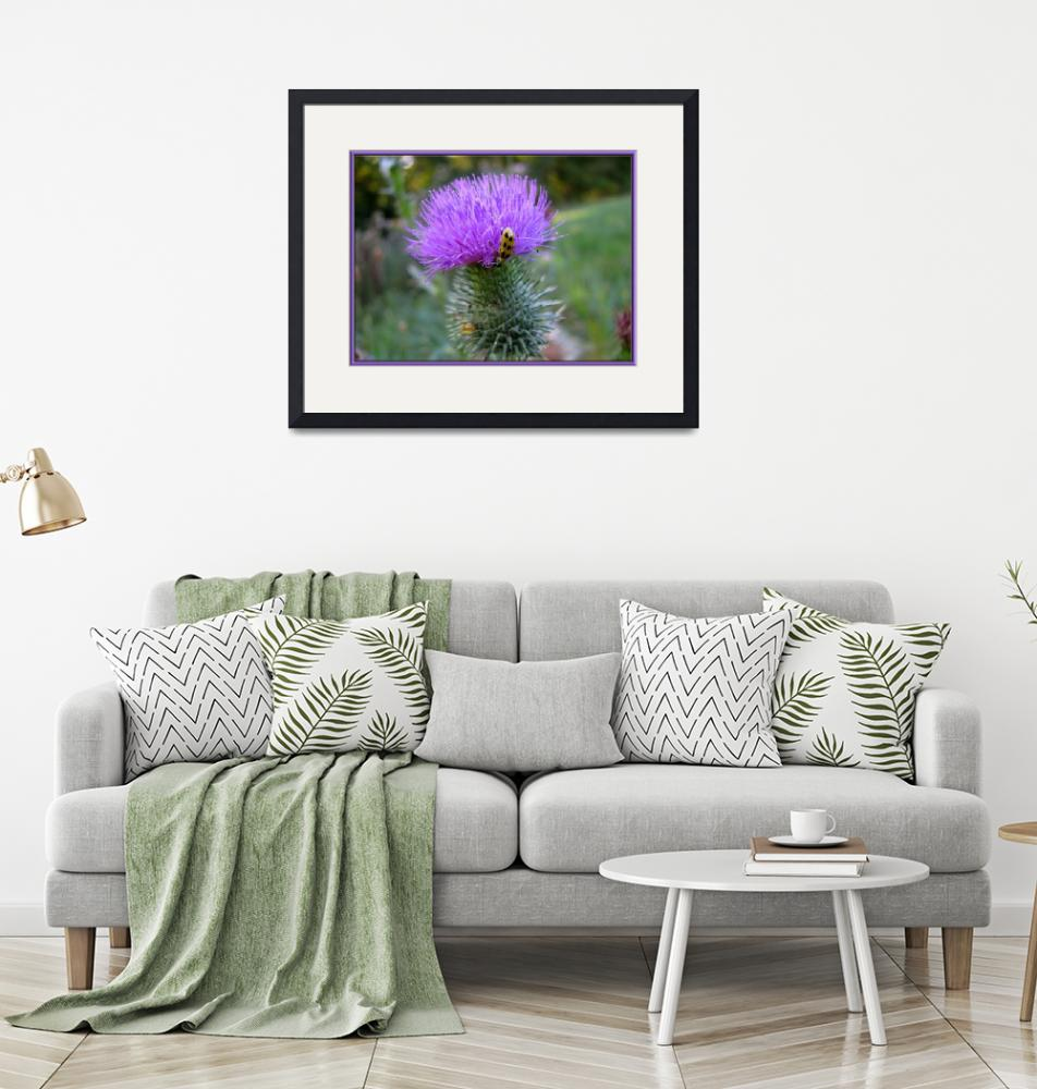 """""""Roses Are Pink, and Thistles Are Purply""""  by GlendaBorchelt"""