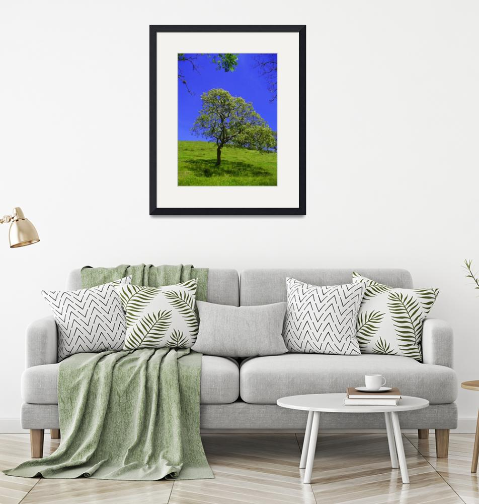 """""""The lonely tree at noon, Costa Rica""""  by guytsch"""