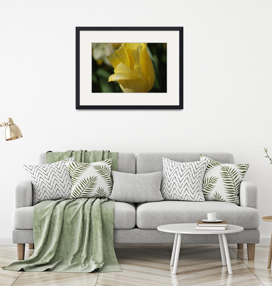 """""""Yellow Tulip"""" (2008) by RickTeare"""