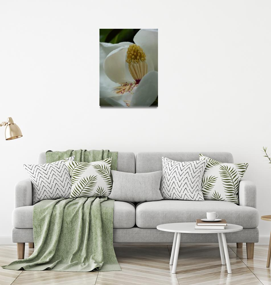 """Magnolia, Vertical, Dee Oberle""  (2010) by GypsyChicksPhotography"