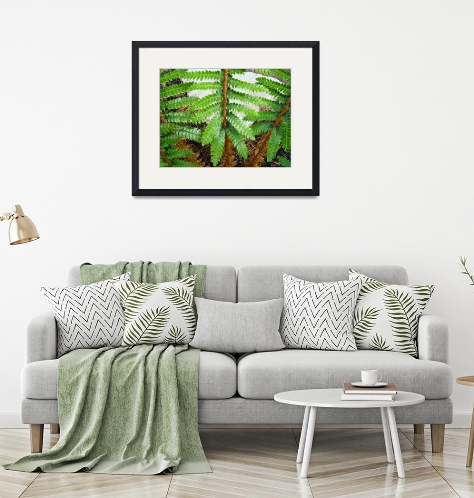 """""""Forest Ferns Branches Leaves Art Prints Fern""""  (2014) by BasleeTroutman"""