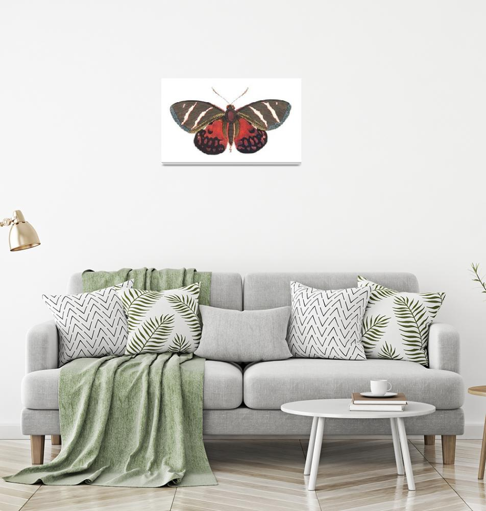 """Papilio Icarus Illustration""  by FineArtClassics"