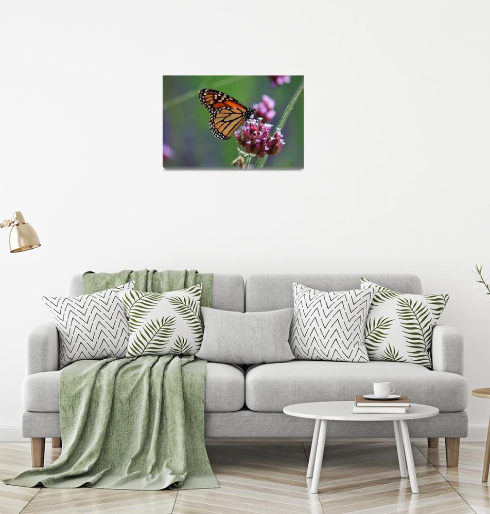 """Butterfly Monarch  Lepidoptera""  (2012) by KsWorldArt"