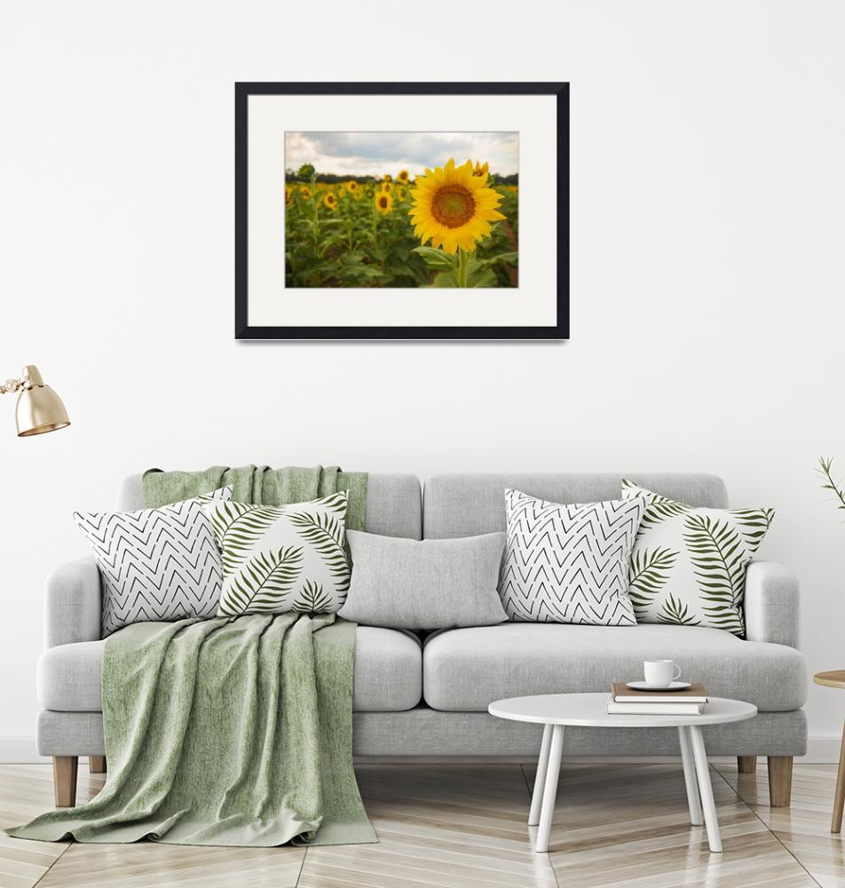 """Sunflower Dreams""  (2019) by julieandel"