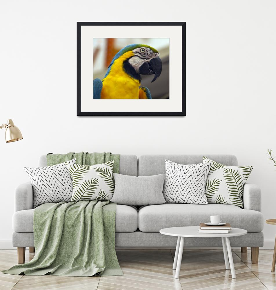 """""""Another Blue and Gold Macaw""""  (2011) by janesprints"""