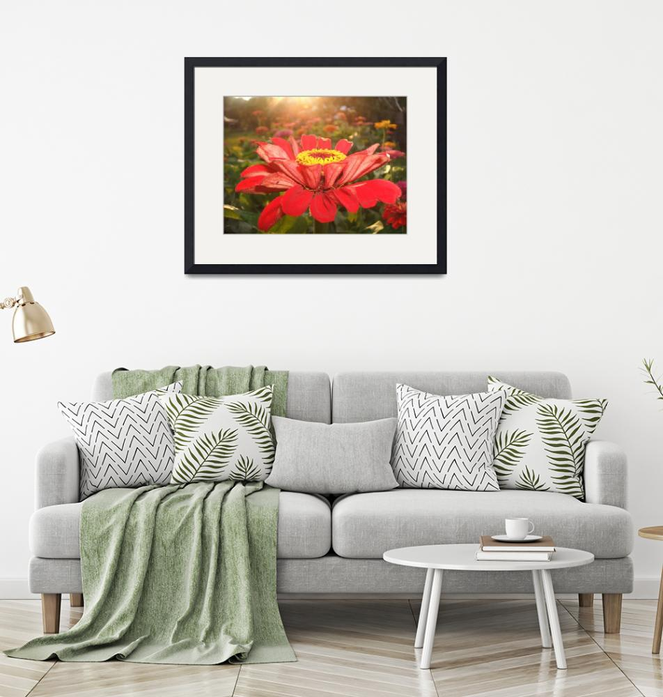 """""""Red Zinnia During Sunset""""  (2006) by DeSantisDuo"""