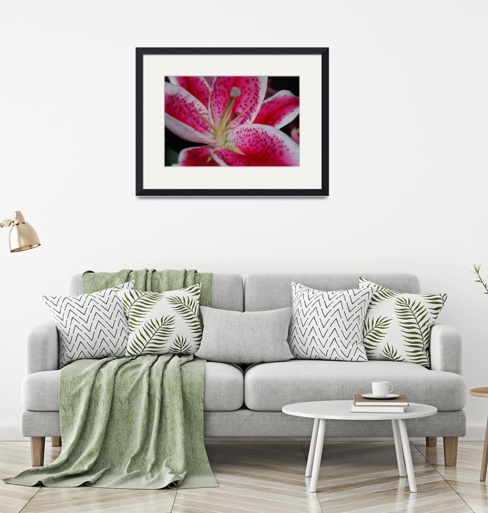 """""""Oriential Lily 1""""  by Rmbartstudio"""