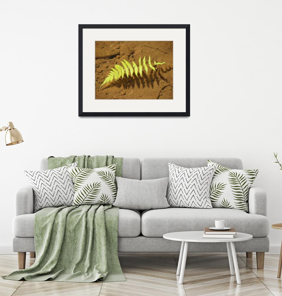 """""""Floating Fern Frond""""  (2008) by LivingGaia"""