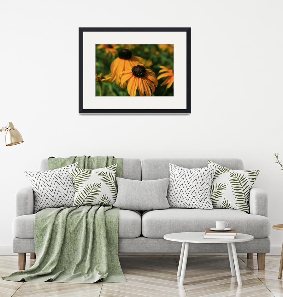 """""""Black Eyed Susans on a Lazy Summer Day""""  (2012) by newimage"""
