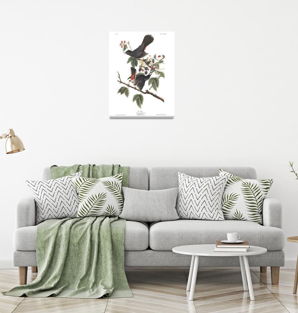 """Audubon Cat Bird, Plate 128""  by FineArtClassics"