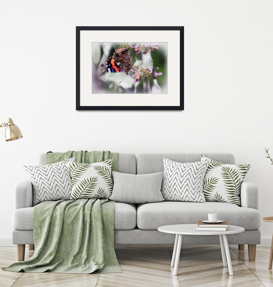 """""""Red Admiral Butterfly on Lambs Ear Plant"""" (2015) by KsWorldArt"""