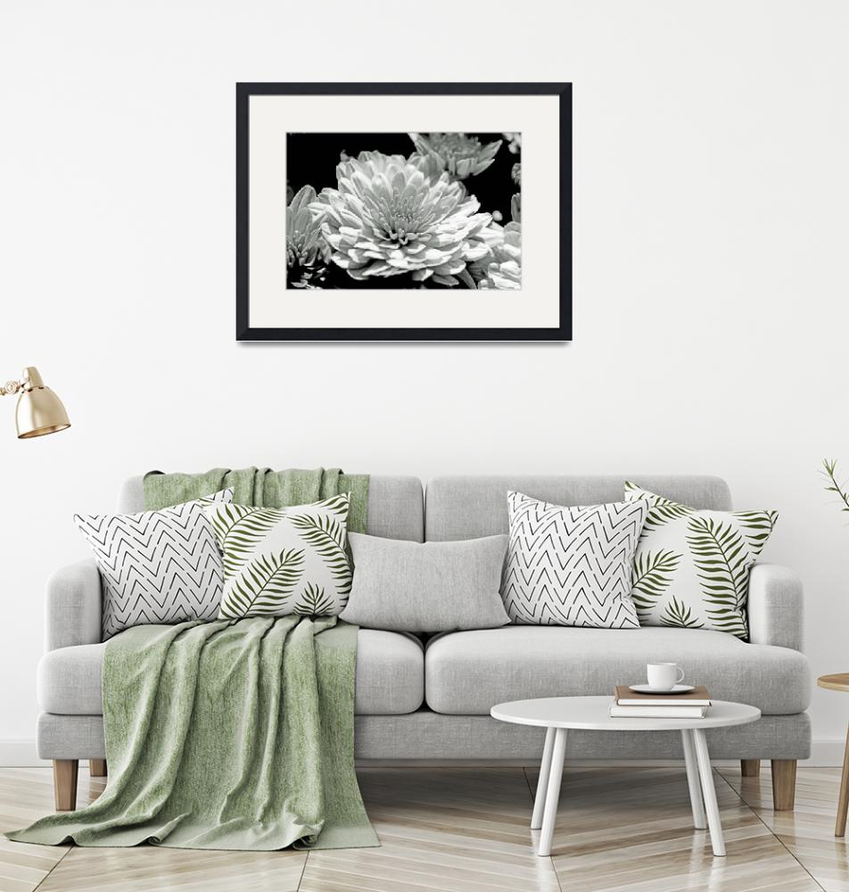 """""""Chrysanthemum in Black and White""""  (2013) by MotherNature1"""
