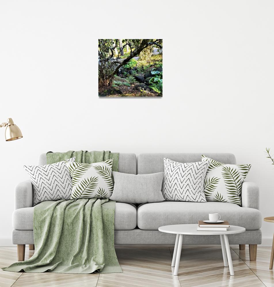 """Light Play on a Moss and Fern Laden Creek""  by EloiseArt"