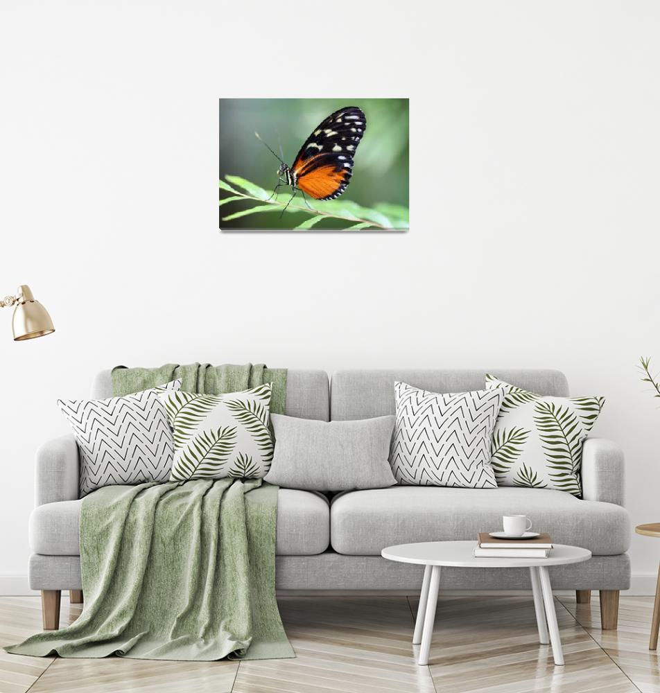 """""""Hecale Longwing Butterfly Macro""""  (2017) by KsWorldArt"""
