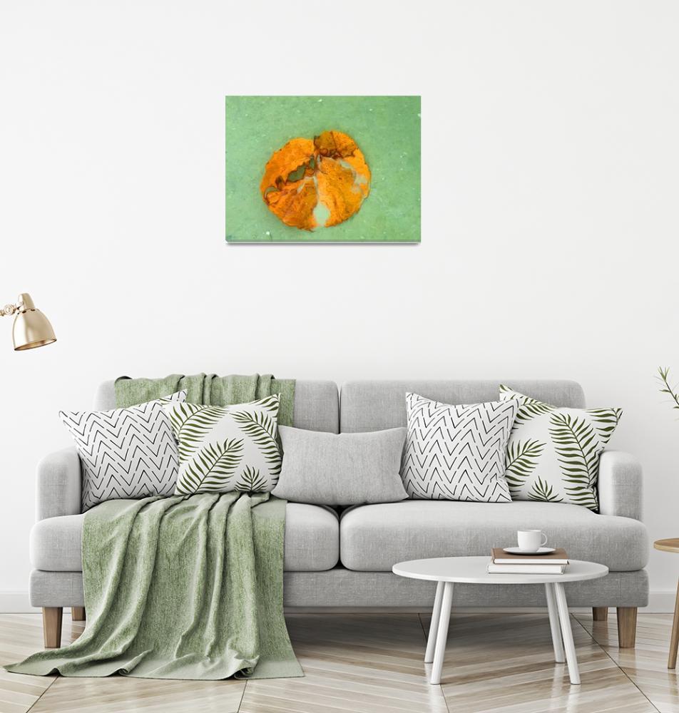"""""""Sea Leaf""""  (2009) by shelshots"""