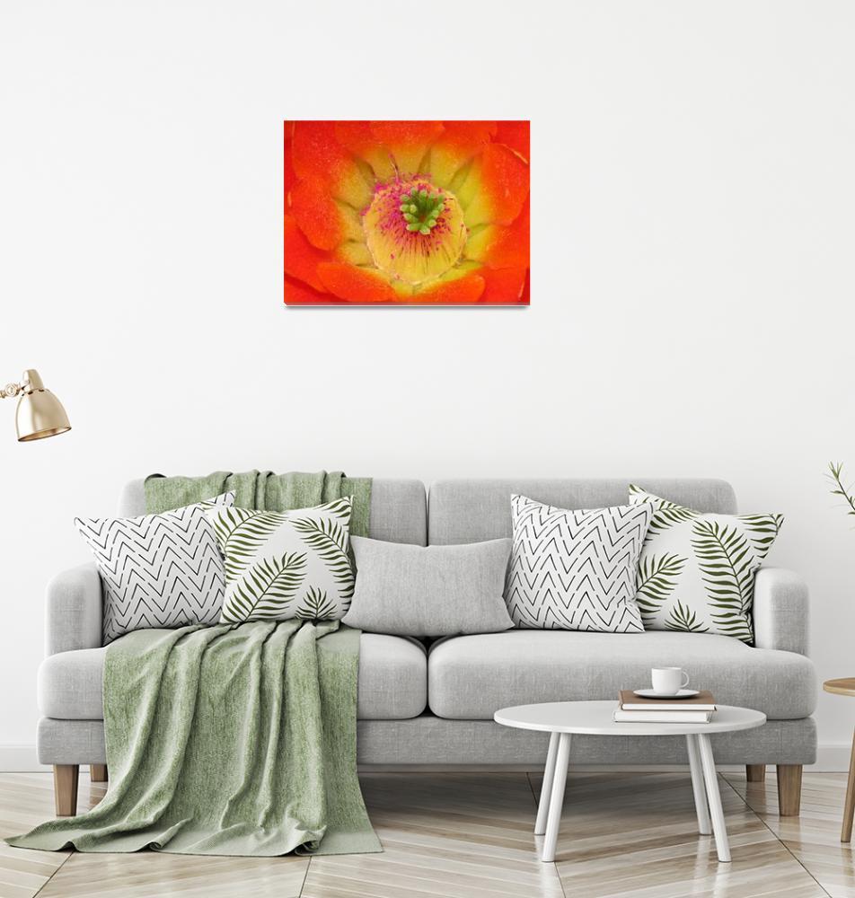 """Cactus flower""  by dublminor"