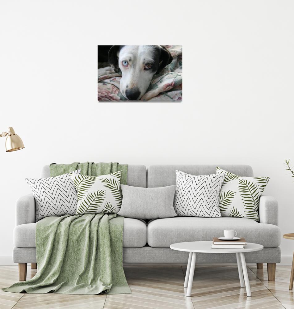 """""""dog with sad odd eyes""""  by sherryswest"""