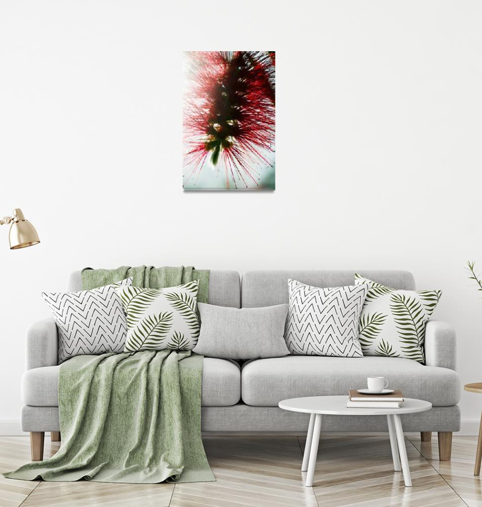 """Crimson Bottlebrush""  by DesignPics"