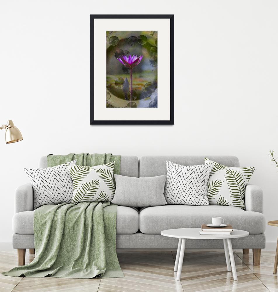 """""""Water Lily""""  (2008) by johncorney"""