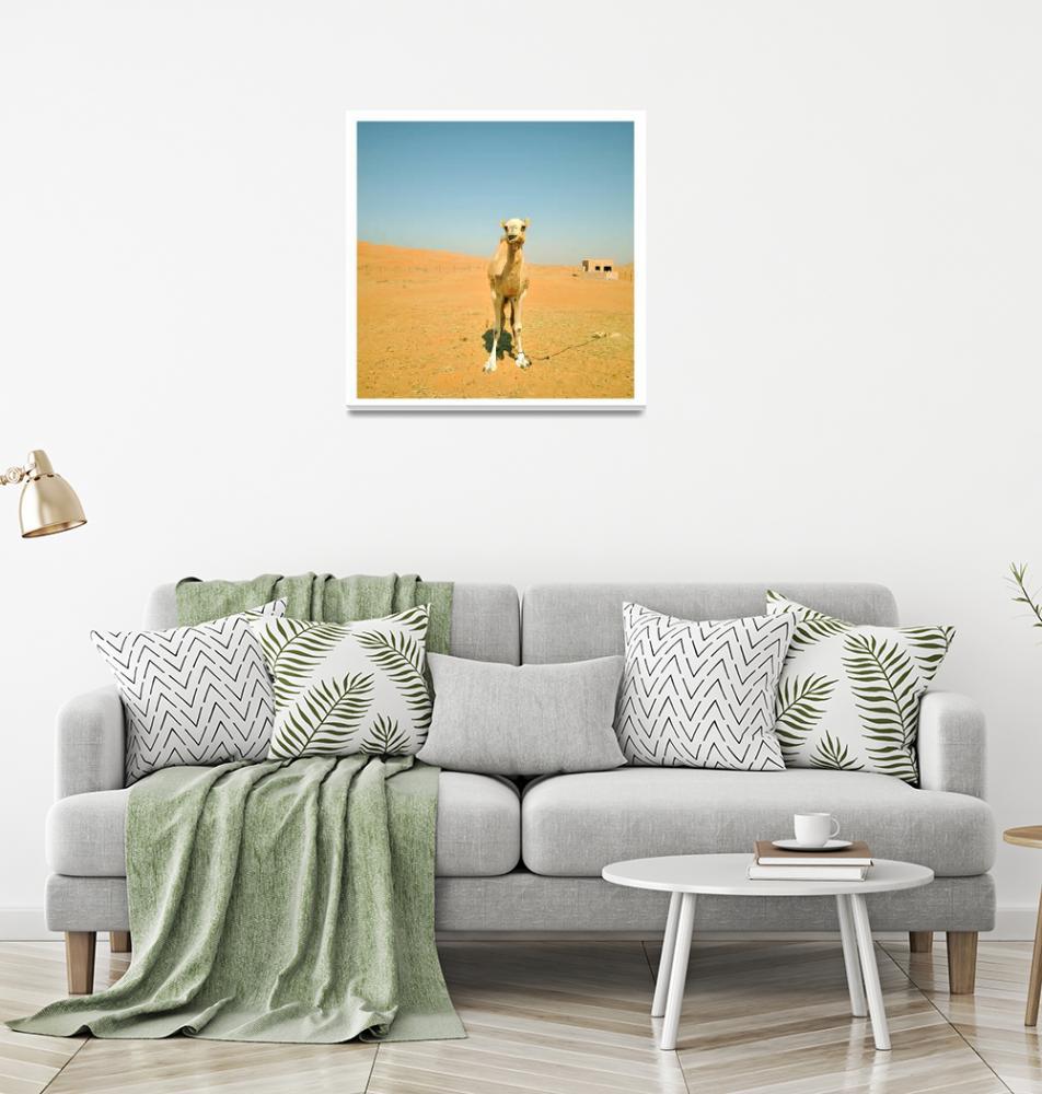 """""""Oman camel""""  by annemortensen"""