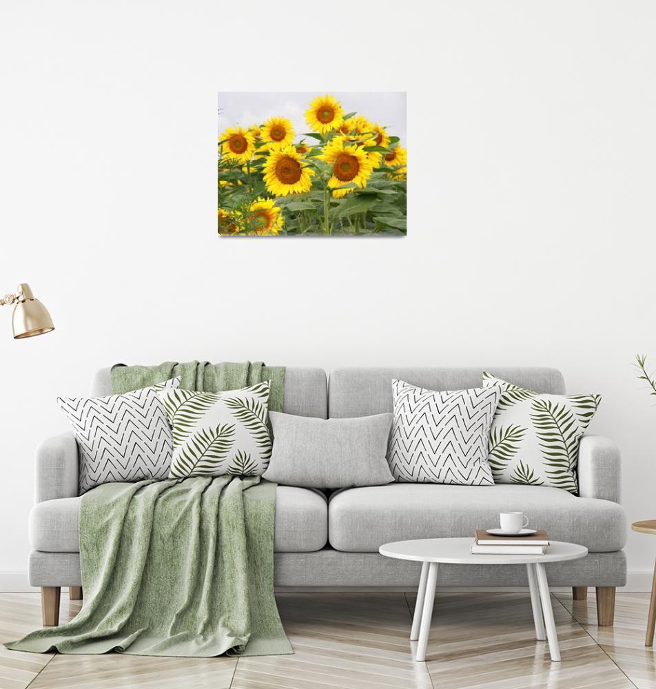 """""""Sunflower field""""  (2010) by easyfigure"""