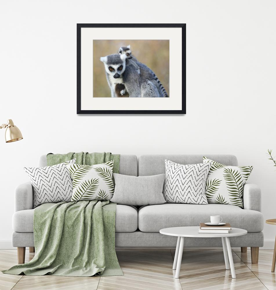 """Lemur mother and her babies""  (2011) by Funcards"