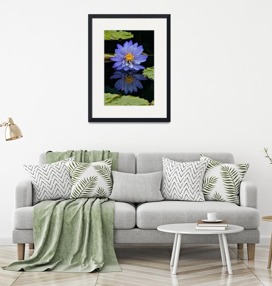 """""""Waterlily And Reflection"""" (2011) by LightHeart"""