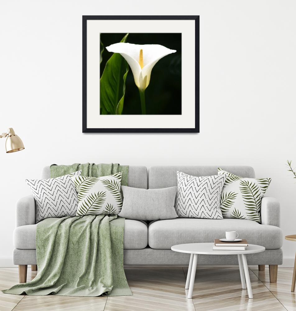 """""""Calla Lily""""  (2010) by SharpArt"""