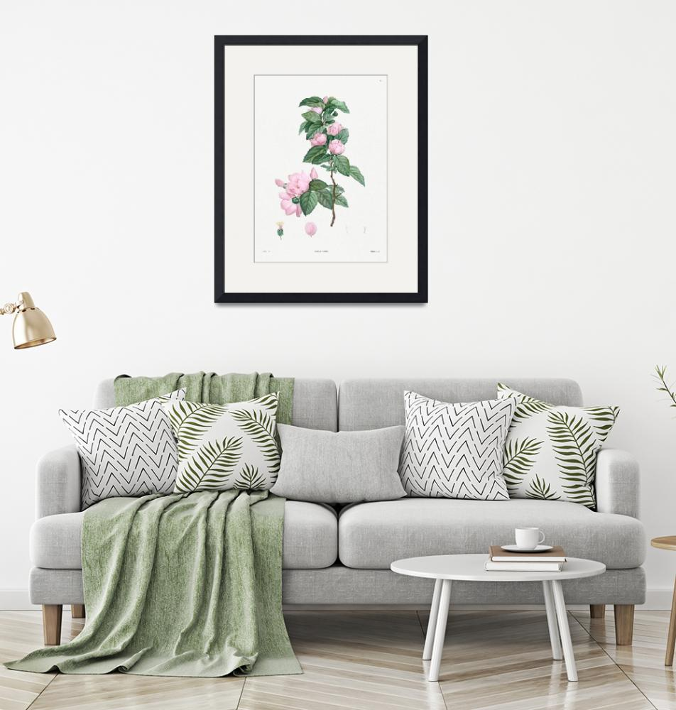 """""""Pale Pink Flower Vintage Botanical""""  by FineArtClassics"""