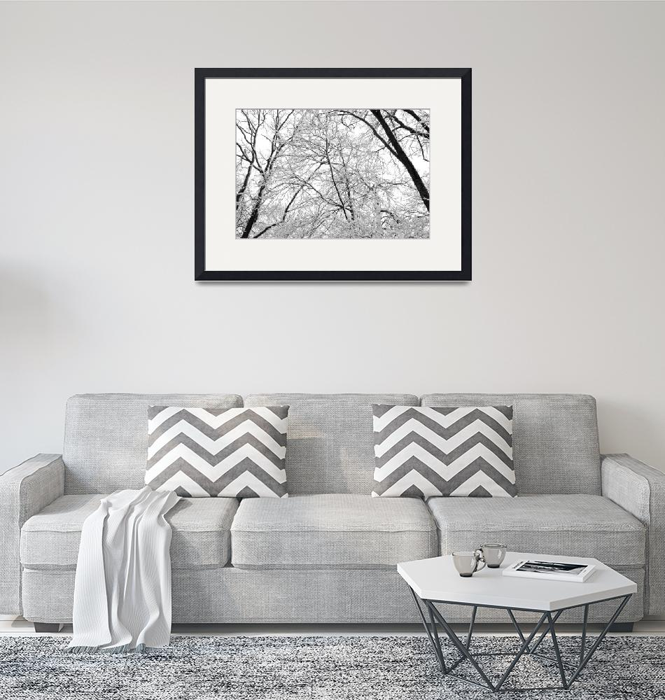 """""""Tree Branches In Winter""""  (2007) by Clearycreativephoto"""