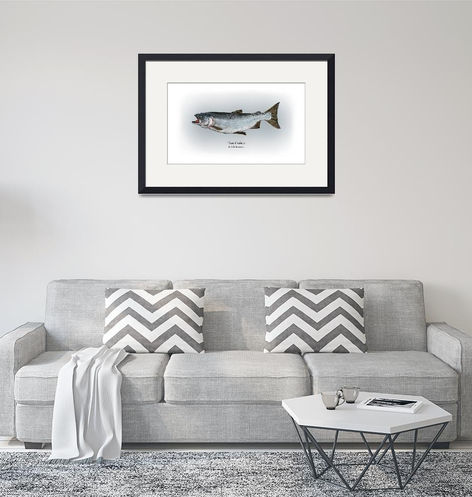 """Chinook Salmon""  by RalphMartens"