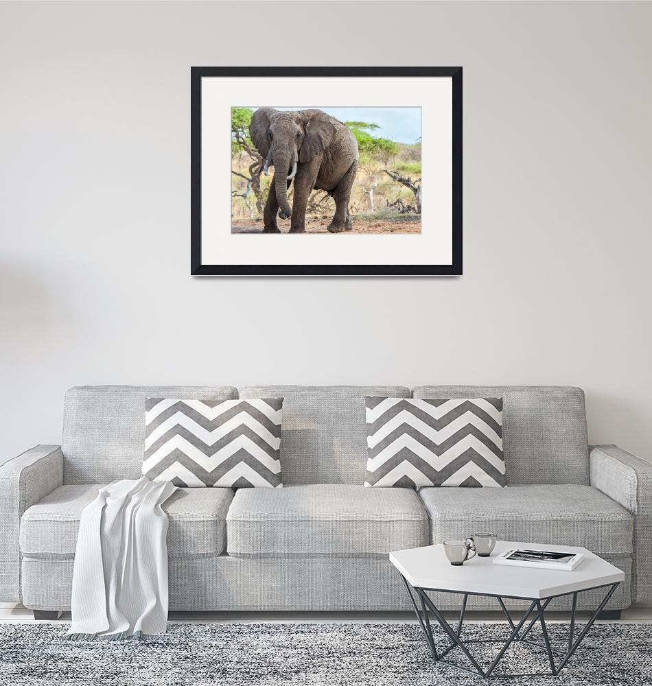 """""""East African Bull Elephant""""  (2011) by mjphoto-graphics"""