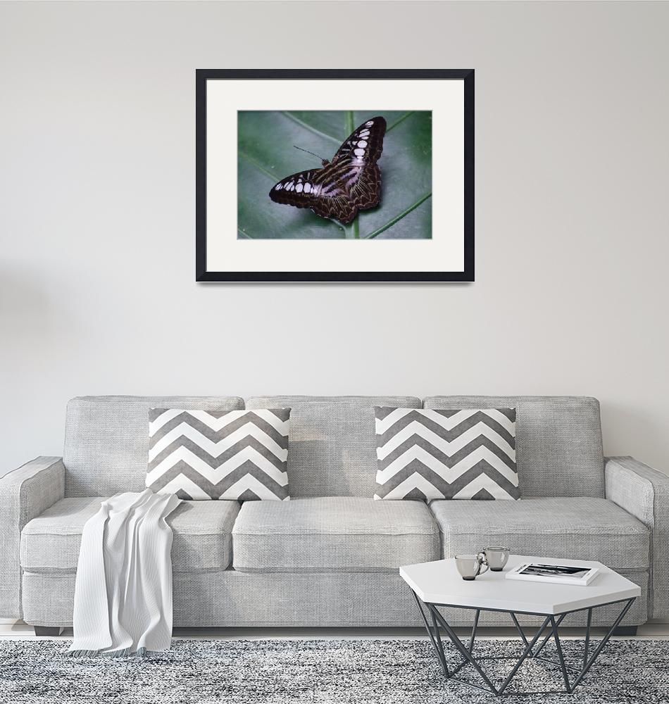 """""""Borneo Butterfly""""  by Teager"""