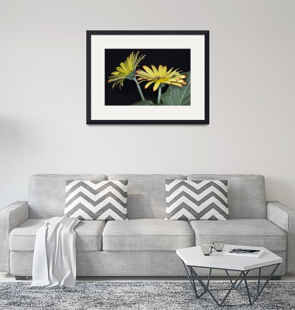 """Yellow And Orange Gerbera""  by StevePurnell"