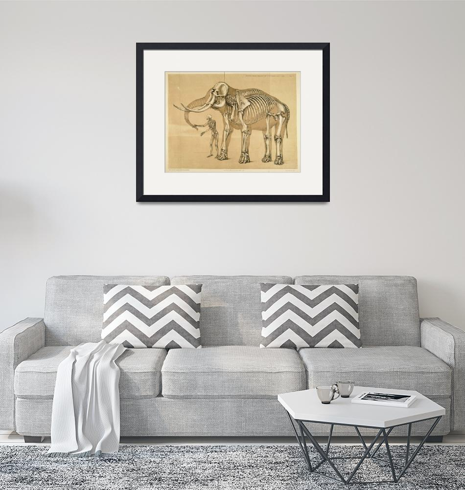"""Vintage Elephant and Human Skeleton Illustration""  by Alleycatshirts"