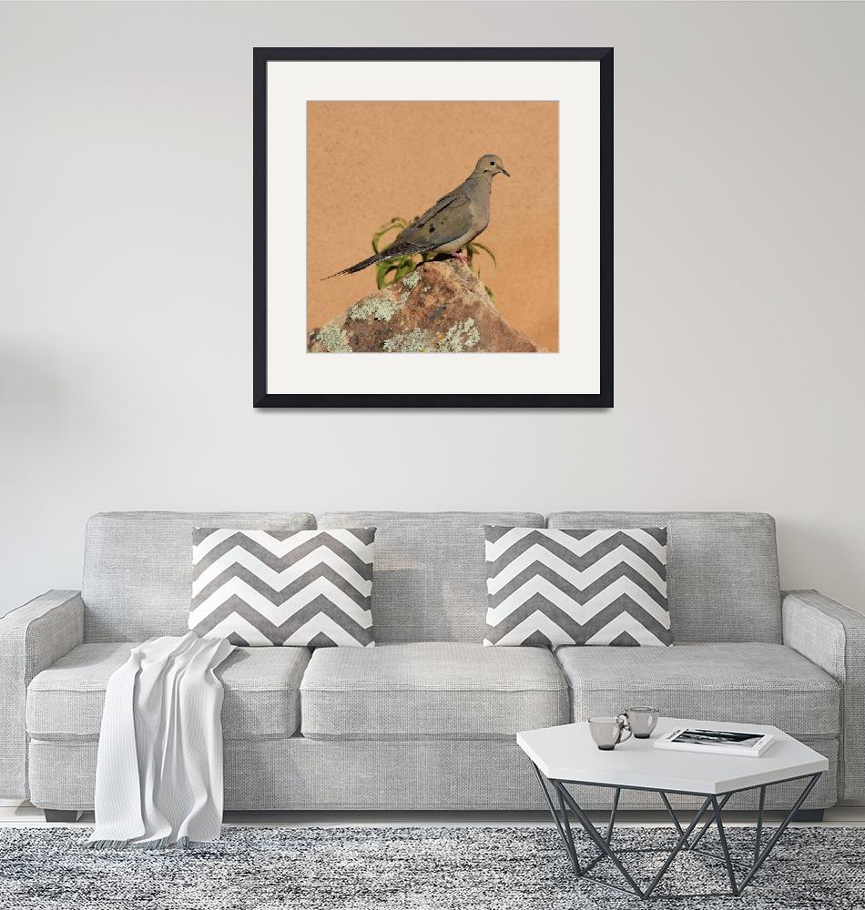 """""""Portrait of a Mourning Dove IMG_4199""""  (2015) by rayjacque"""