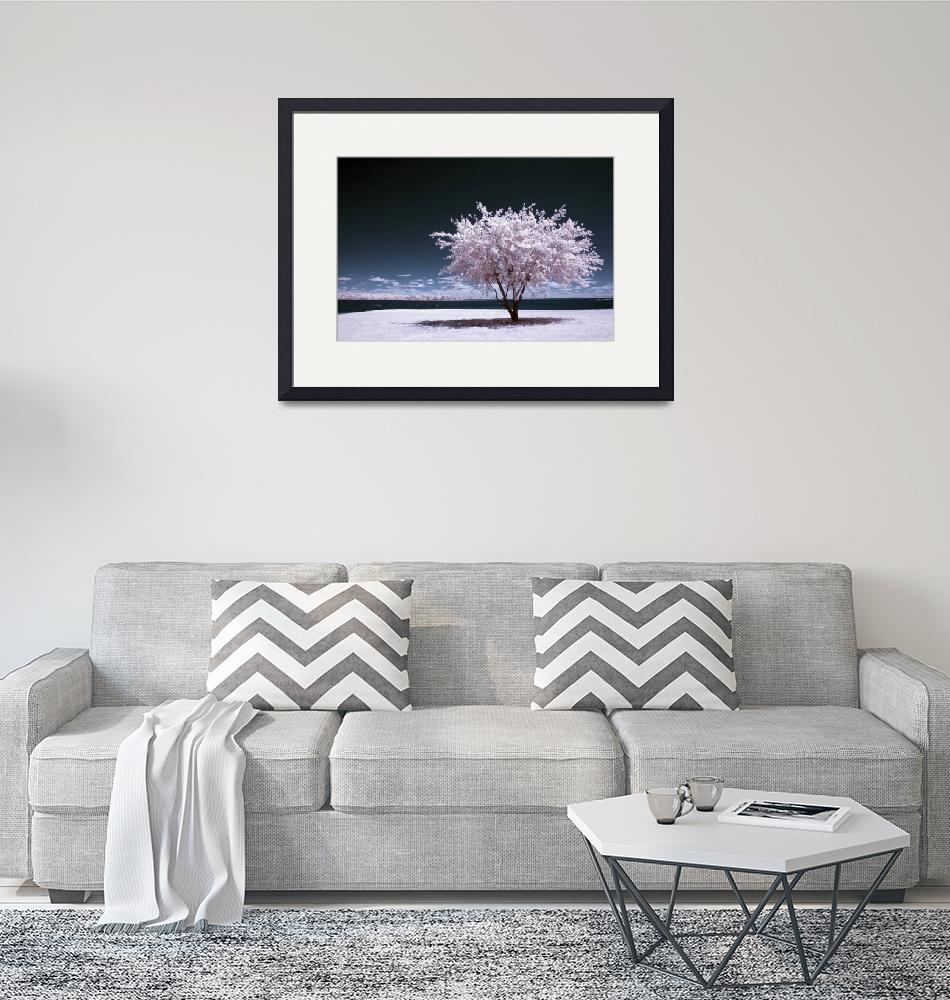 """""""a winter summer - infrared tree landscape""""  (2007) by miir"""