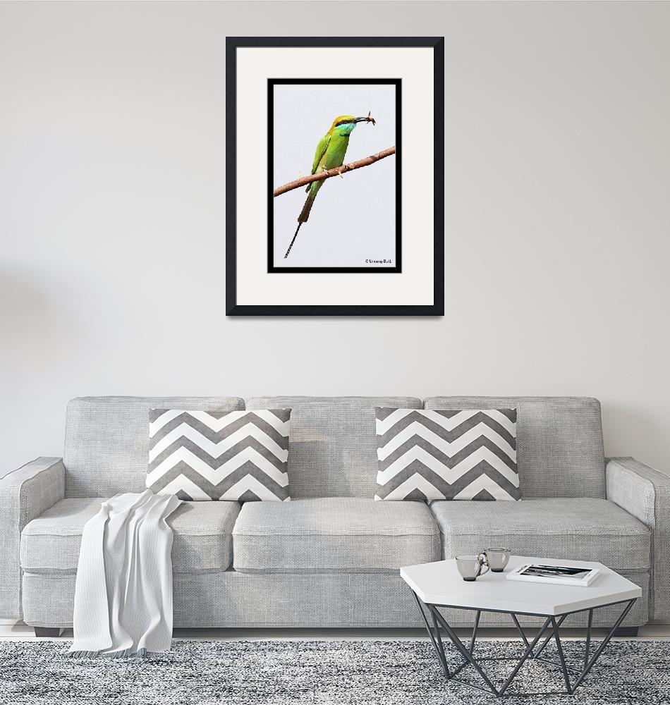 """The Little Green Bee-eater ( Merops orientalis)""  (2007) by umang"