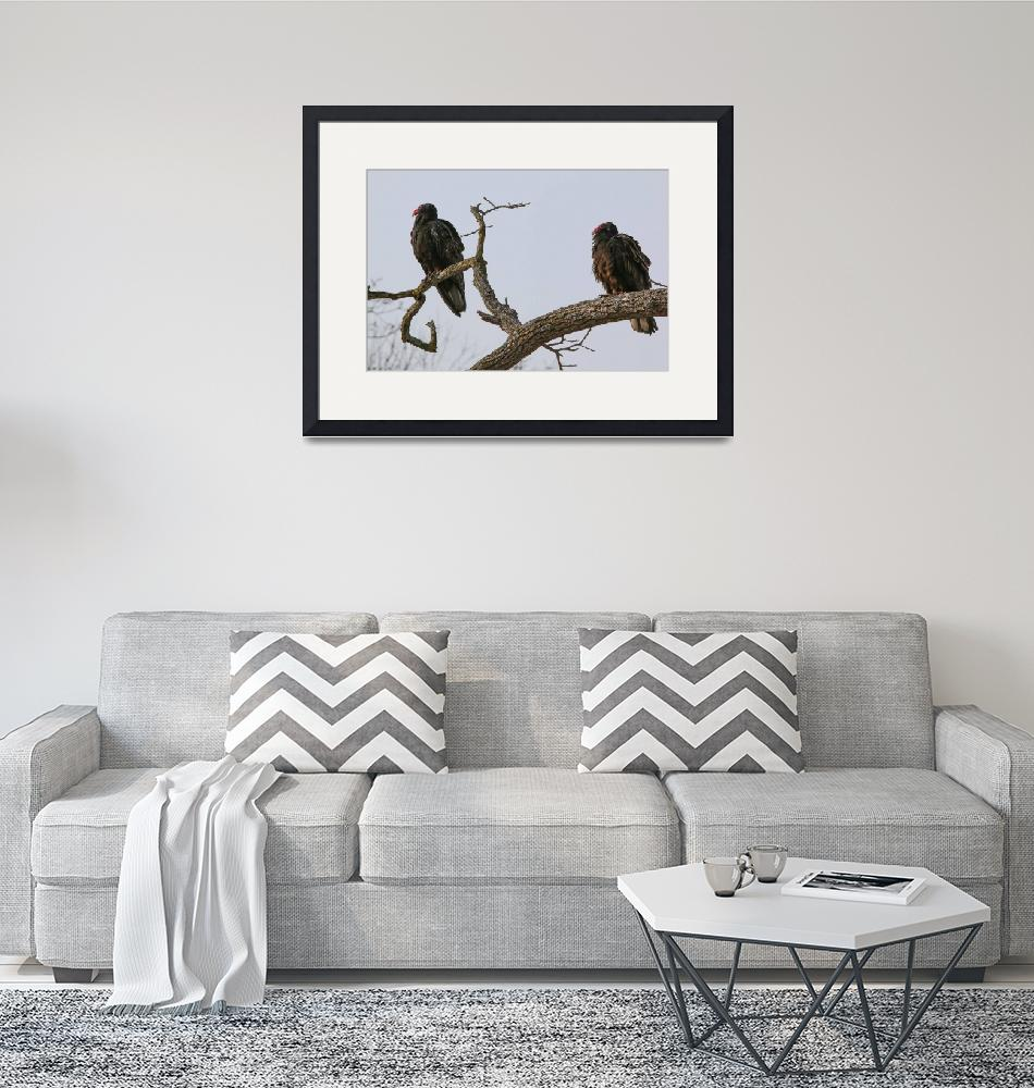 """""""vultures 11P""""  (2017) by angelophotos"""