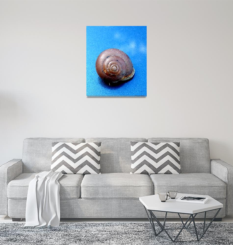 """""""The Shell of a Snail"""" (2011) by Kimmary"""