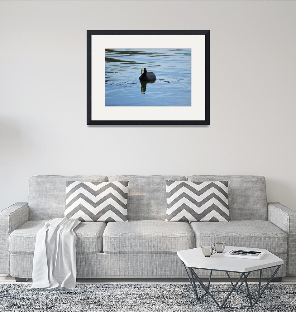 """Andean Coot""  (2015) by rhamm"